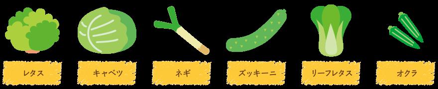 農業で独立を目指す菊地農園塾|菊地農園塾で栽培している野菜